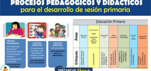 Procesos Pedagógico y Didácticos